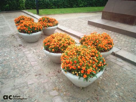Commercial Flower Planters by Flower Pots And Planters Around The Streets Award
