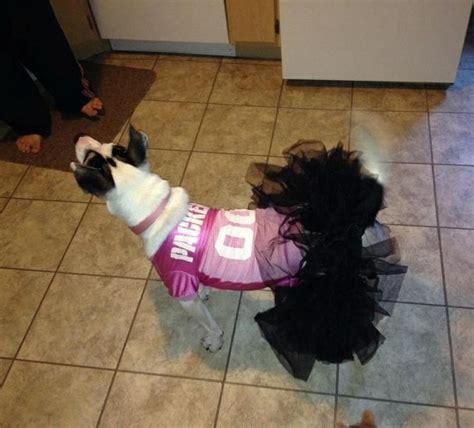 sheboygan humane society golden retrievers http y94 blogs pets 146 puppy determined to master tricky treadmill