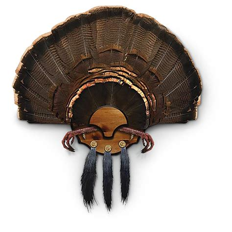 how to mount a turkey fan beardmaster turkey fan mount kit 293253 taxidermy at