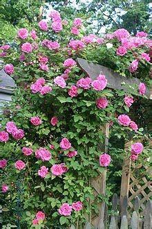 gardenia warnawarni tanaman hias
