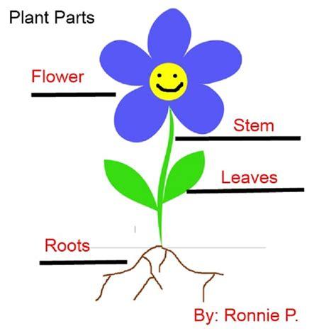diagrams for children diagrams of a plant diagram site