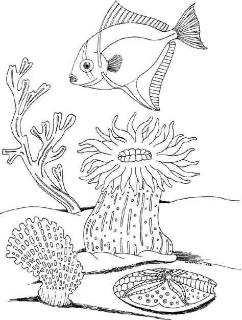 sea plants coloring pages