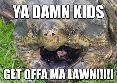 Funny Turtle Memes - flying turtle memes
