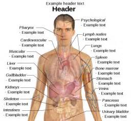 upper human body part human anatomy chart
