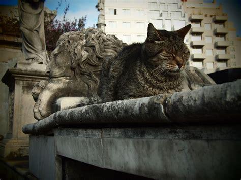 graveyard cats  la recoleta cemetery buenos aires