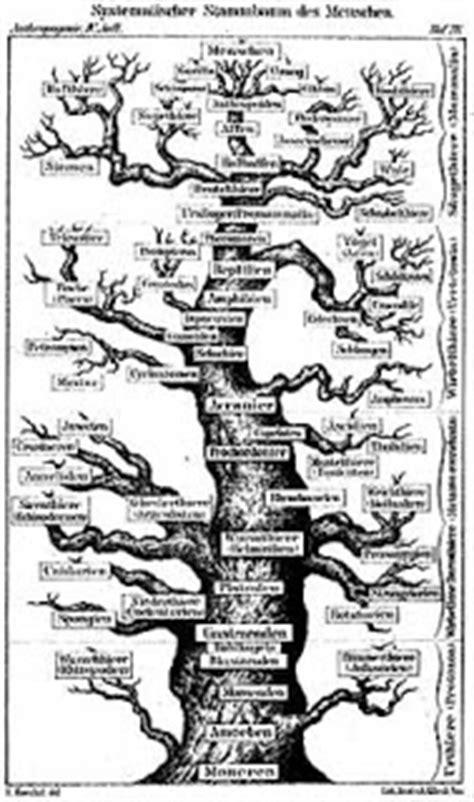 Joe Bartholomew: Tree of Life Diagrams