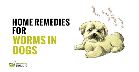 10 best home remedies for worms in dogs
