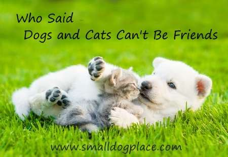 puppies and kittens together dogs and cats living together best advice for a harmonious household