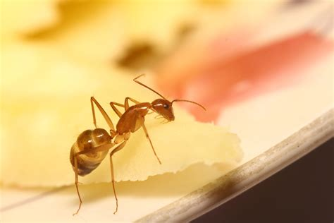 how to treat an ant infestation b w pest
