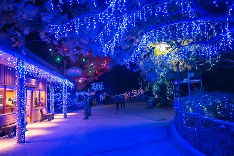 cincinnati zoo festival of lights illuminate your imagination with a visit to the festival