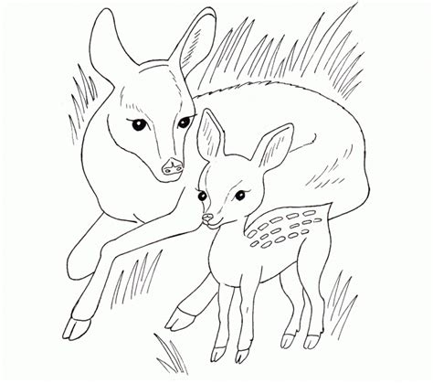 free coloring pages online animals coloring pages animals wild printable 16 wild horse