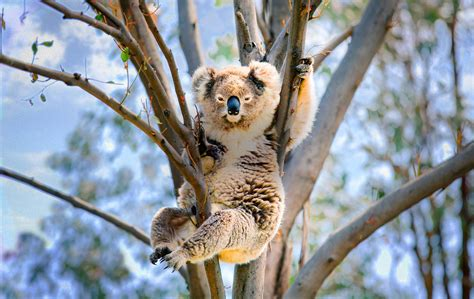 Cute Trees by The Koala In The Coal Mine Takepart