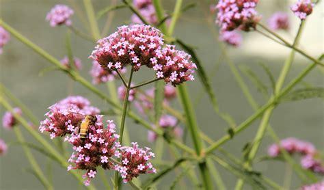 fiori di loro fiori di bach elenco e loro propriet 224