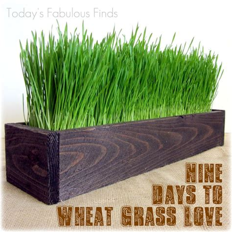 Indoor Grass Planters by 78 Best Images About Indoor Green Design Ideas On Growing Grass Planters And Grass