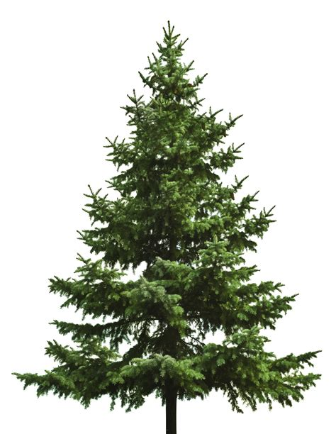 Beautiful Realistic Christmas Trees #3: Christmas_tree_PNG18.png