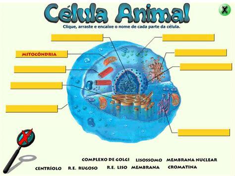 Fotos De Celulas Animais | a c 233 lula animal game planeta biologia