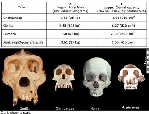 brain size activity 3 relative brain size efossils resources