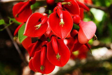 imagenes de flores uruguay d 237 a de la flor nacional de argentina
