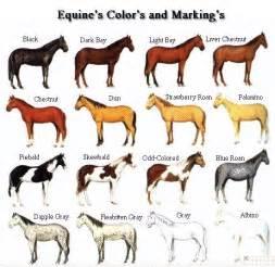 color of horses coat color genetics in horses