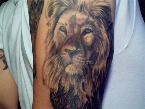 meaning of lion tattoo meaning tattoosphoto