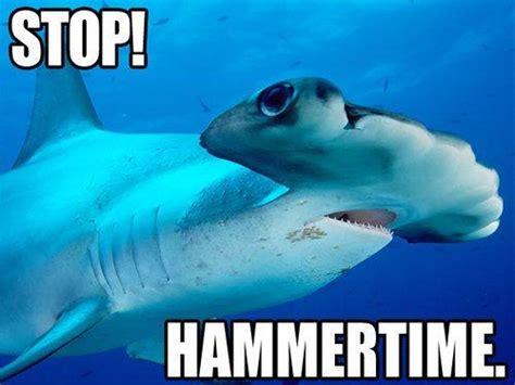 Funny Shark Meme