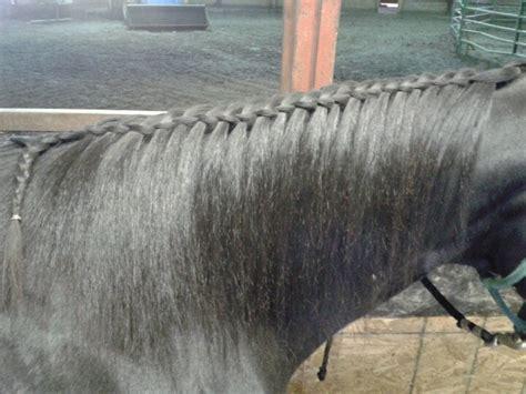 barrel racing horse hair braids 1000 images about braids on pinterest running western
