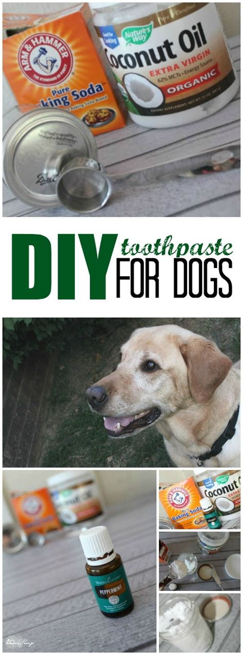 is lemon bad for dogs diy toothpaste for dogs