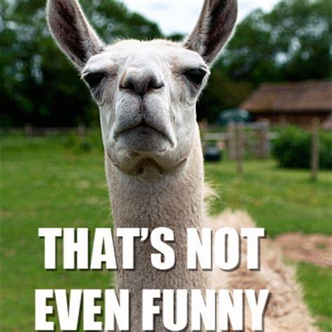 Funny Llama Memes - the 9 funniest llama memes kendrick llama llama del rey