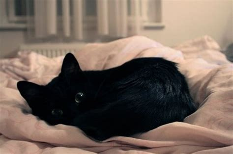 animal in bed helena nymphodora a richardson google