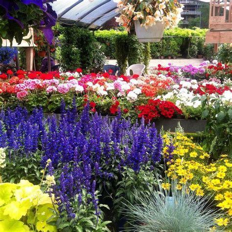 piante da cortile 17 migliori idee su piante per cortile su