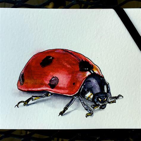 Ladybug World Ladybug In The World