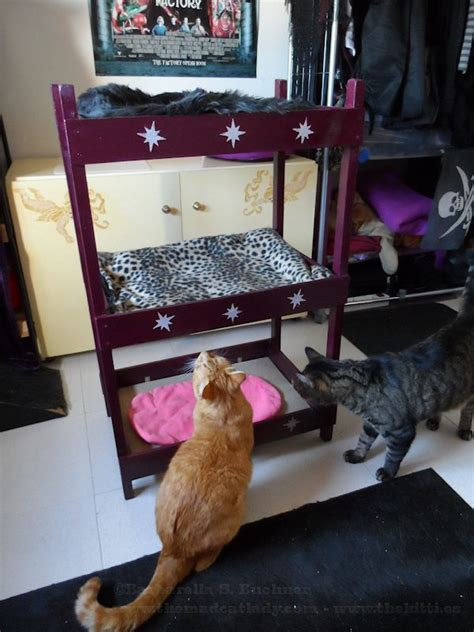 Cat Bunk Beds by Catster Diy Make Your Own Bunk Bed Catster