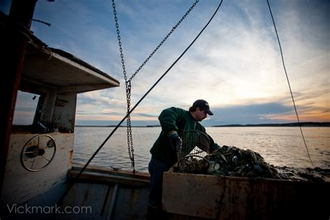 nyt travel section new york times travel section clip wellfleet oystering