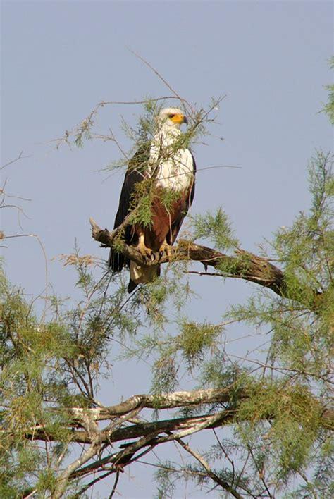bird sanctuary djoudj national park senegal travel