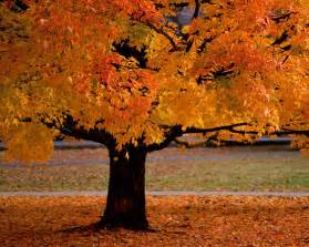 Places To Stay In Comfort Texas Autumn Tim Sevenhuysen Com