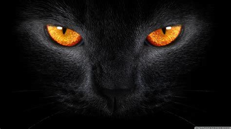 desktop wallpaper black cats black cat hd desktop wallpaper high definition