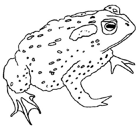 coloring pages frog and toad frog coloring pages coloringpages1001 com