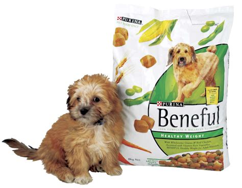 beneful puppy publicis hal riney go to the dogs with purina agencyspy