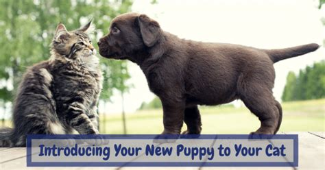 introducing a puppy to a cat presenting your new pup to your cat clever pet products