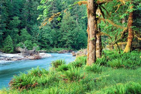 imagenes 3d bosques fondo pantalla paisaje bosque