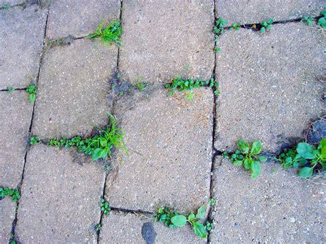 How To Remove Weeds Between Patio Stones how to keep weeds from growing in pavers get rid of