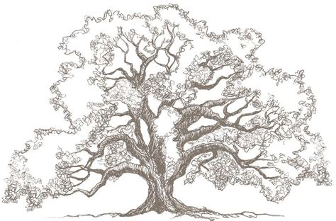 sketched tree tree inslee by design