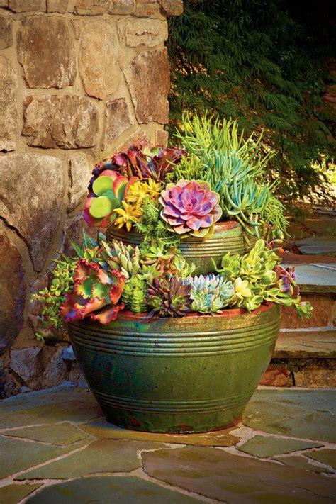 cactus container garden ideas succulents 122 container gardening ideas container