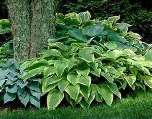 8 low maintenance outdoor plants for the busy gardener
