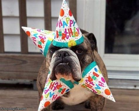 happy birthday puppy images birthday pictures