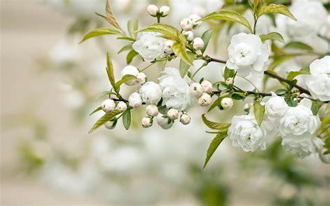 beautiful white flower weneedfun