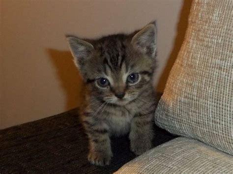 cuanto pagar por cuidar gato la edad del gato mascotas