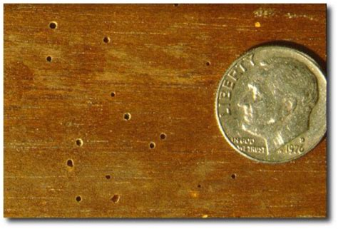 bed bugs in wood furniture that adorable cabinet for sale may bug you at home