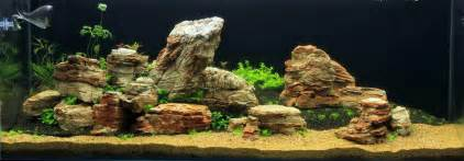 Aquascaper Steine Beim Aquascaping Aqua Rebell