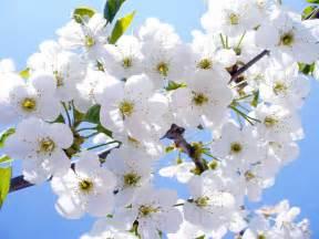 imagenes de rosas unicas flores blancas frescas transform the world artistically
